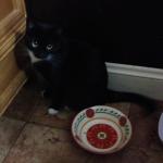 Some food, please---pretty please?